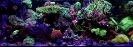 steinkorallenaquarium1