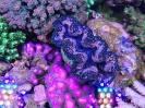 steinkorallenaquarium2