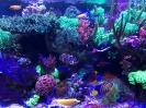 steinkorallenaquarium3