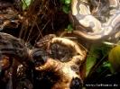 pyton_20120330_1774210551