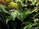 terrpflanzen_20120330_1203255195
